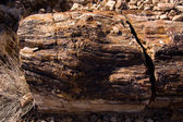 Petrified Logs — Stock Photo