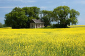Little House on the Prairies — Stock Photo