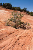 Patterns in the Sandstone Rock — Stock Photo
