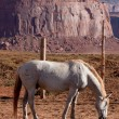 Stock Photo: Horse at Monument Valley