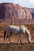 Horse at Monument Valley — Stock Photo