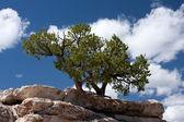 Tree Growing on the Stone Ledge — Stock Photo