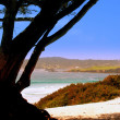 Carmel by the sea — Stock Photo