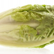Lettuce — Stock Photo #4985197