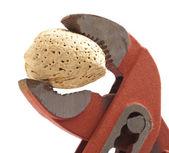 Almond nut — Stock Photo