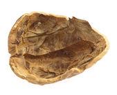 Walnut shell — Stock Photo