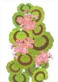 Gerânio de floração — Vetorial Stock