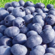 Bluberries on green grass — Stock Photo