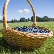 Blueberries in the basket outdoors — Stock Photo