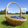Stock Photo: Blueberries in basket outside