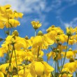 Stock Photo: Yellow summer flowers