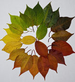 Colorwheel — Stockfoto