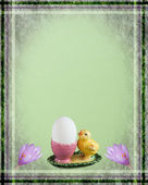 Easter card with chicken and crocus — Stock Photo