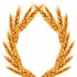 Stock Photo: White background with ears of wheat on it