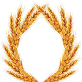 White background with ears of wheat on it — Stock Photo