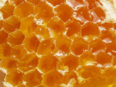 Honeycomb (top view) — Stock Photo