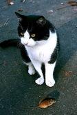 Kedi ve fare çok farklı olmasına rağmen ancak arkadaş olabilirler — Stok fotoğraf
