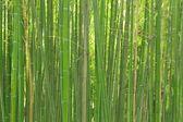 Stalks of bamboo — Stock Photo