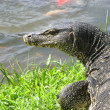 Stock Photo: Monitor lizard reptile