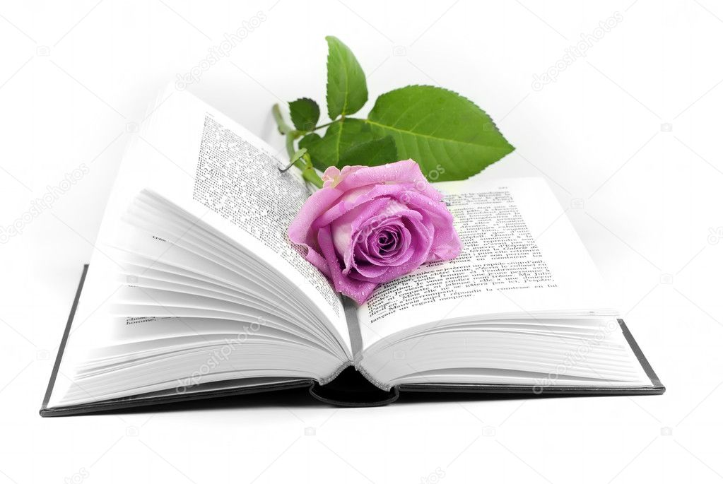 A rose placed in an open book — Stock Photo #5016011