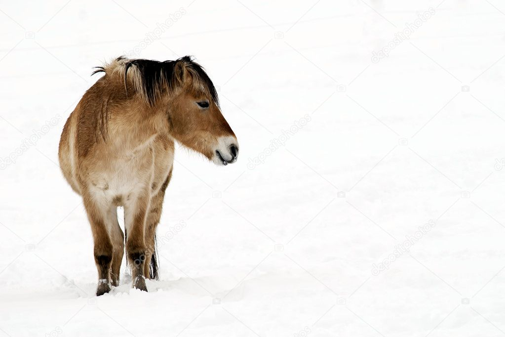 A horse in snowy landscape — Stock Photo #5059153