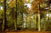 Deep Forest — Stockfoto