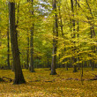 The hornbeam forest — Stock Photo