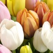 The bunch of tulips — Stock Photo #4980061