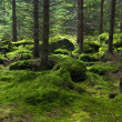 The primeval forest — Stock Photo #4983110
