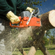 The chainsaw — Stock Photo