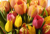 The bunch of tulips — Stock Photo