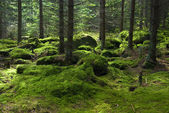 The primeval forest — Stock Photo