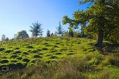 The English moorland — Stock Photo