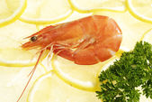 The Red Shrimps — Stock Photo