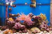Coral reef in aquarium — Stock Photo