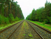 Railroad along the forest — Stock Photo