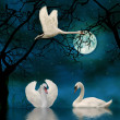 Stock Photo: Swans in the moonlight on a lake