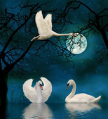 Swans in the moonlight on a lake — Stock Photo