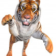 Jumping tiger — Stock Photo