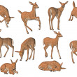 Young fawns in different poses — Zdjęcie stockowe
