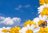 Butterfly on a bouquet of daisies and calendula — Stock Photo