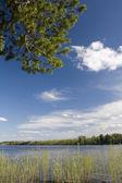 Cedar above river — Stock Photo