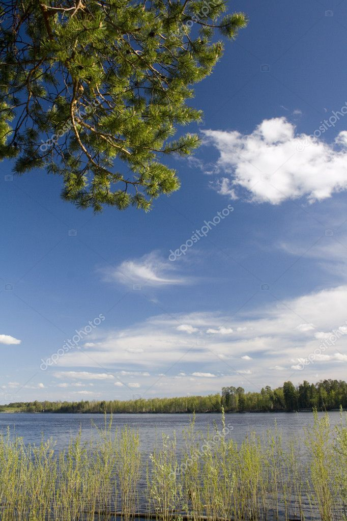 Green cedar above river. Spring landscape — Stock Photo #4979523