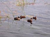 On a lake — Stock Photo