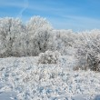 Stock Photo: Blue winter sky in sunny day.