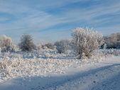 Vintern skogen 3 — Stockfoto