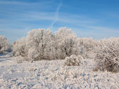 Winter frost 2 — Stock Photo