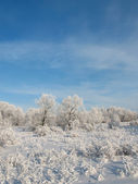 Winter forest 7 — Stock Photo