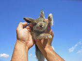 Little hare. — Stock Photo