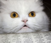 Reading cat — Stock Photo